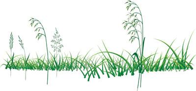 Grass-Drawing.jpg