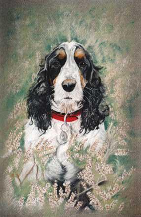 dog-Pastel-portrait-6
