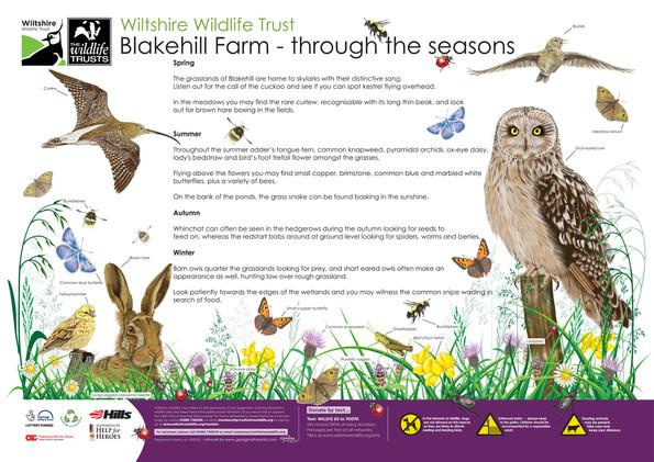 Wilshire-Wildlife-Trust-Wildlife-Illustr