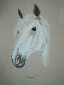 horse-pastel-portrait-3