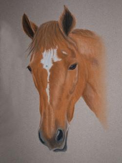 horse-pastel-portrait-4