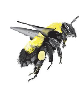 Bee-2-Drawing.jpg