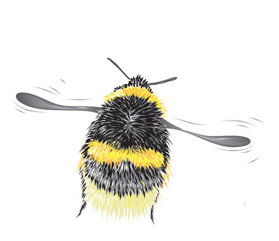 Bee-1-Drawing.jpg