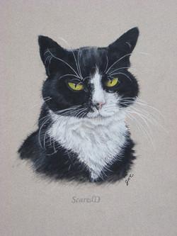 Cat-Pastel-portrait-1