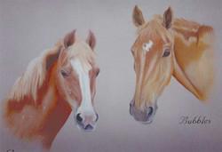 horse-pastel-portrait-5