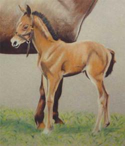 horse-pastel-portrait-7