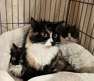 c calico mama_with mini me kitten and gr