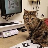 Luna_in vet office.jpg