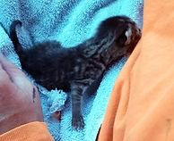 Griswold kitten_6.jpg