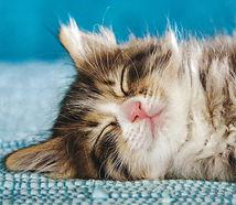 kittens need extra sleep.jpg