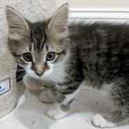 Eviction kitten