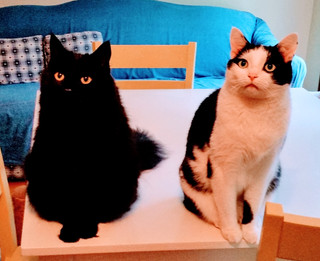 "Willie & Jack (black/white) Brown. Adopted in August 2010. Lauri & Francis say, ""We LOVE them SO much!!!"""