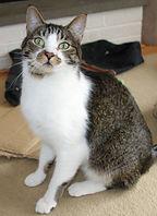 Louie returned home.jpg
