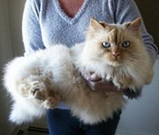 "Dawn Psaledas donated ""In memory of my Mom and her kitty, Kody"""