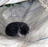 Griswold kitten_2.jpg