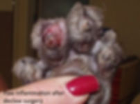 declaw Paw_inflammation_after_declaw_sur