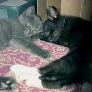 Fremont House of Pizza kittens