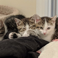 Hoarding situation kittens