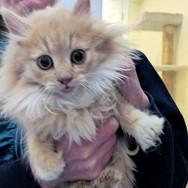 Kitten from 2 year rescue effort