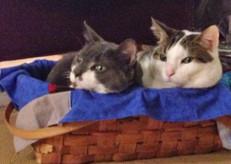 Karen Fitz's babies: Ted (grey) and Simon (white)