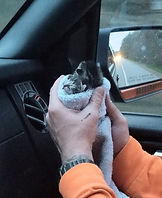 Griswold kitten.jpg