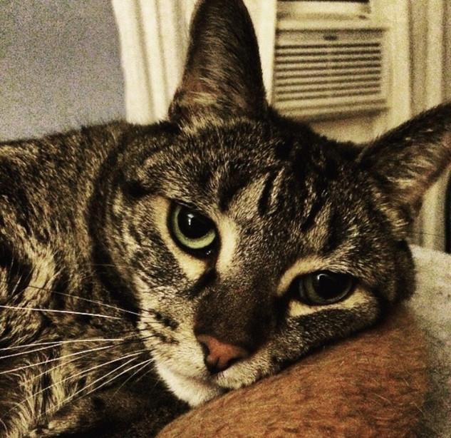 Lynda Augustine: in honor of my late Mom and her beloved cat, George, who just passed away last week.
