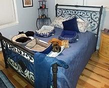 cat beds.jpg