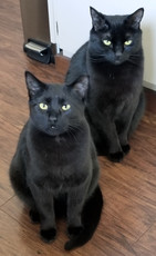 """""""These are my two loves,"""" says Mom, Lynn. Luna will be 5 in June, and Merlin just turned 1 in April. He was saved by SAFER!! He was 4 months old when I adopted him from MRFRS. It took a few months, but he is quite the character, and they get along great!"""