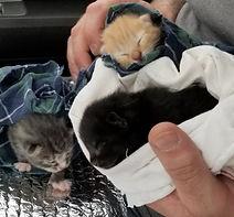 Griswold kitten_1.jpg