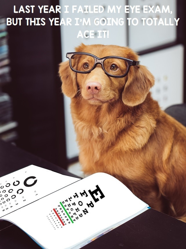 Dog with glasses, eye exams, cute dog, studying