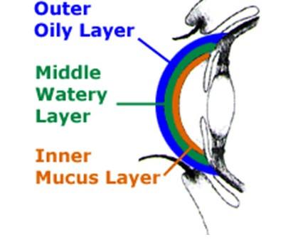 A Closer Look at Dry Eye Disease (DED)
