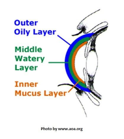 dry eyes, restasis, eyelove, xiidra, tear film anatomy, dry eye disease