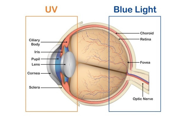 UV light versus blue light exposure to the eye