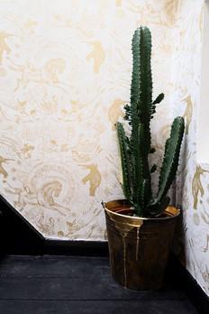 Cactus_Fotor.jpg