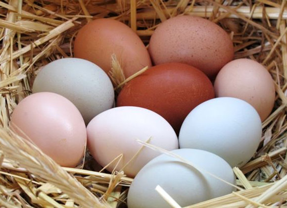 Pullet Duck Eggs - SOLD OUT