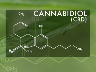 What's The Big Deal About CBD Oil?