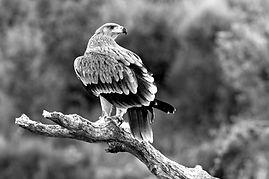 Eagle watching in Saskatchewan