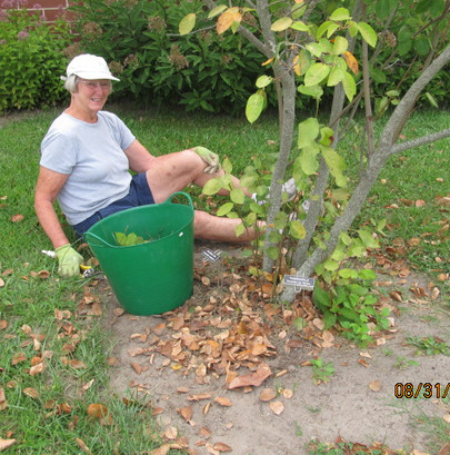 Lord Baltimore Landscaping Project 1.JPG