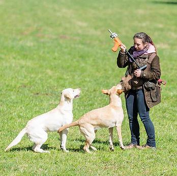 Roughcorner Labrador Training