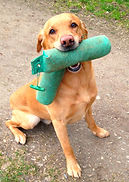 RoughCorner Labrador Arbeitslinie