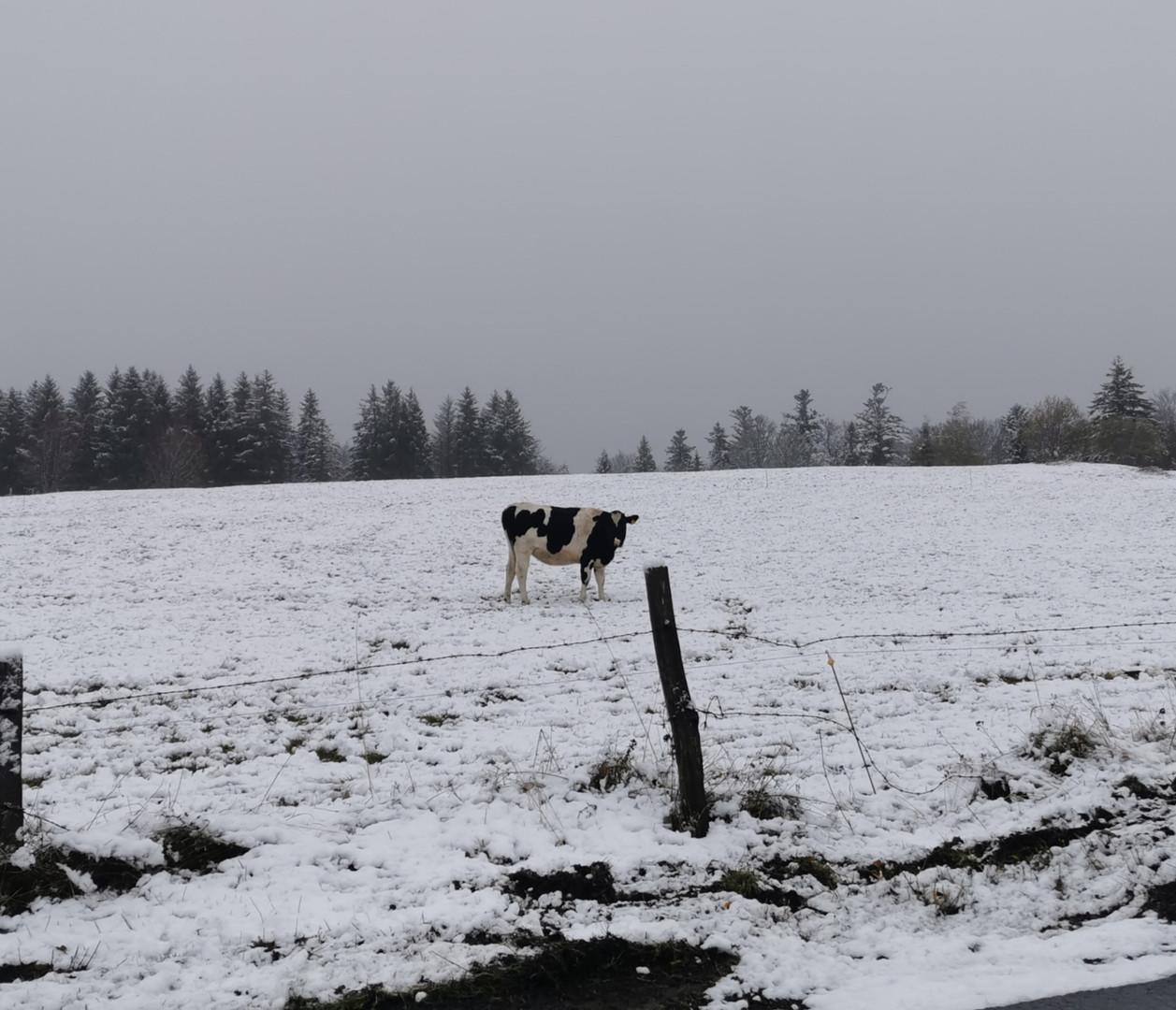 surprise par la neige de novembre