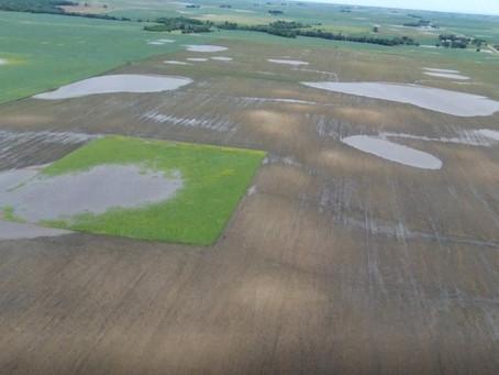 DRONES AJUDAM A ESTIMAR PERDAS NA AGRICULTURA DE PRECISÃO