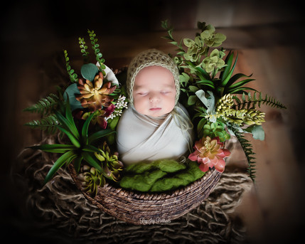 newborn with succulents