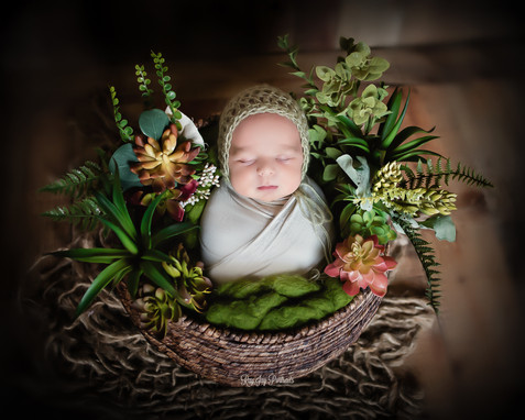 newborn with succulents