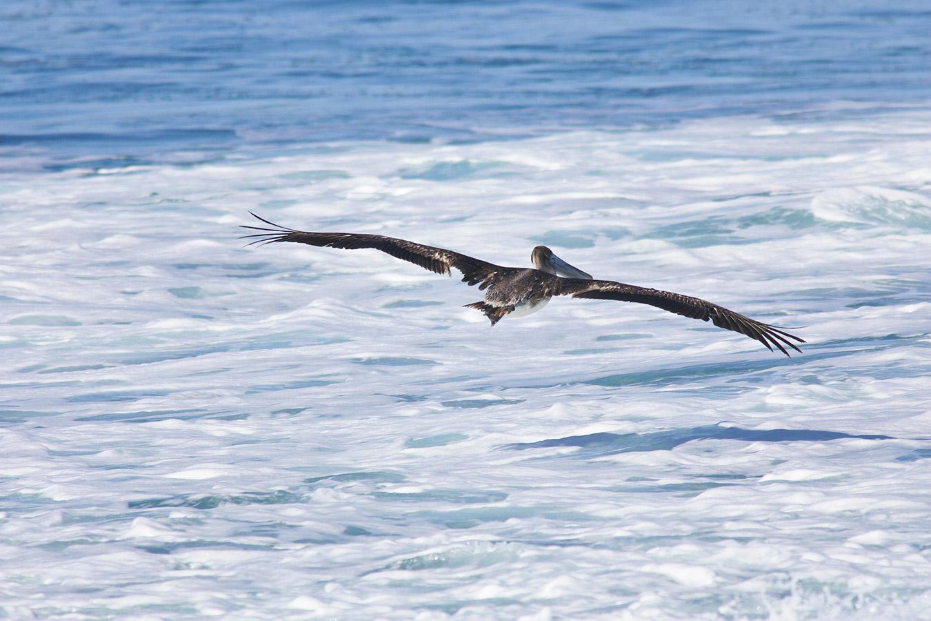 gallery_pelican_seafoam