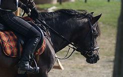 riding-454757.jpg