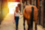 horse-3260152_1920_edited.jpg