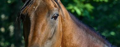 лошадь 4 сезона