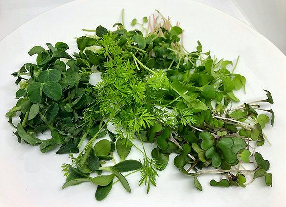Microgreen Sampler Pack