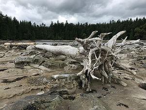 Bones of tree .JPG